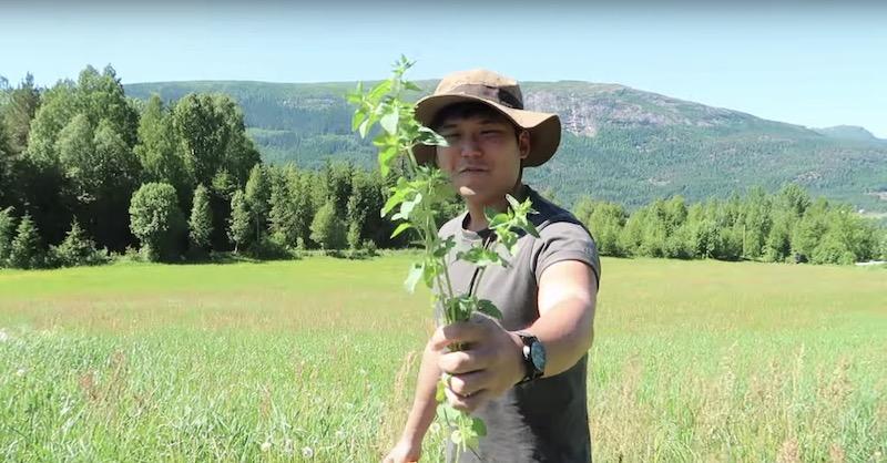 ノルウェーで農業ボランティア(WWOOF)してる僕の一日を公開!